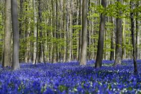Jaukus miškas
