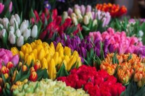 Profesionalūs floristai